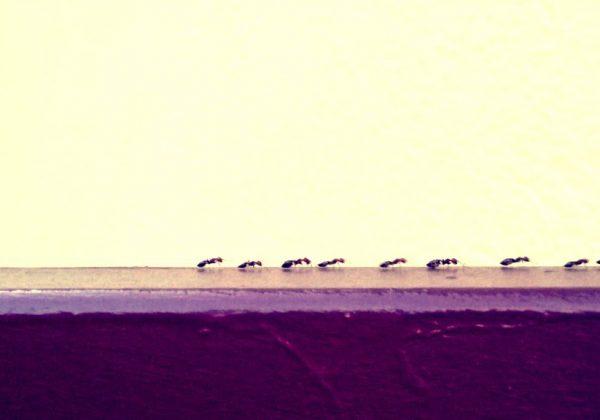 Photographie ambiance - Outil-plume photographe indépendant